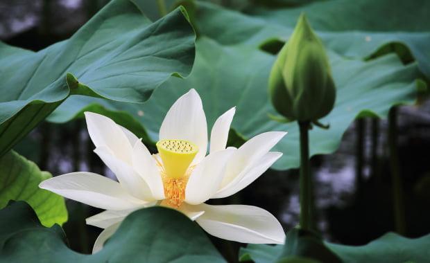 お仏壇のご供養